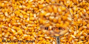 mycotoxins-are-not-under-control-720px